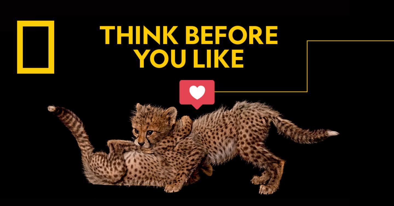"""Chiến dịch kêu gọi mọi người cân nhắc trước khi nhấn """"like"""" để bảo vệ loài báo của National Geographic"""