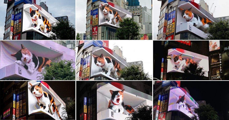 Ấn tượng với chú mèo 3D khổng lồ trên Billboard LED tại Ga Shinjuku (Nhật Bản)