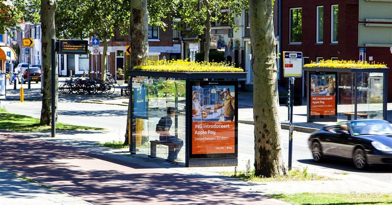 Hà Lan phủ xanh trạm dừng xe buýt thành thiên đường trú ẩn cho loài ong